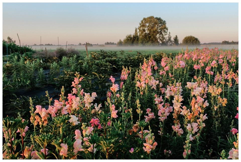 Vietiniai gėlių ūkiai.Roberta Drasute. Vestuviu dekoras